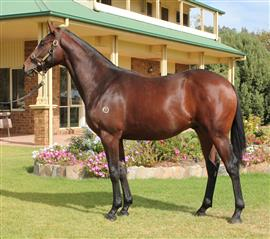 LOT 102 DOMESDAY  DUEL CROWN C Custom