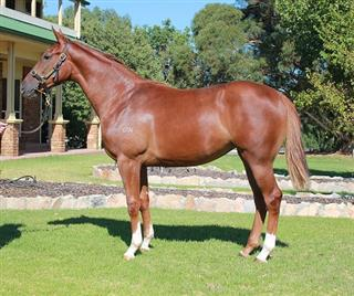 LOT 619 STAR WITNESS - RAIN SHADOW Filly Mobile